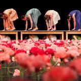 Festival: Nelken (Carnations)